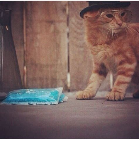 it's Heisenberg the cat