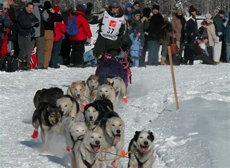 Iditarod Veteran To Share Trail Tales - The Independent