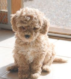 25 best puppies images on Pinterest | Baby puppies, Cute