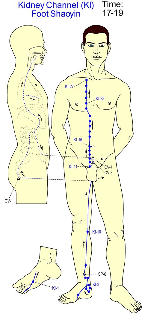 gall bladder acupuncture meridian traces out the shape of