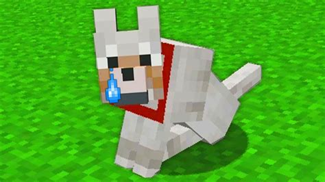 My minecraft dog died (really sad) - YouTube